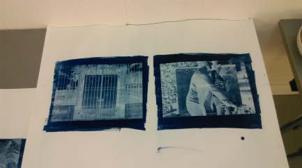 Cyanotypes (Samantha Brown)